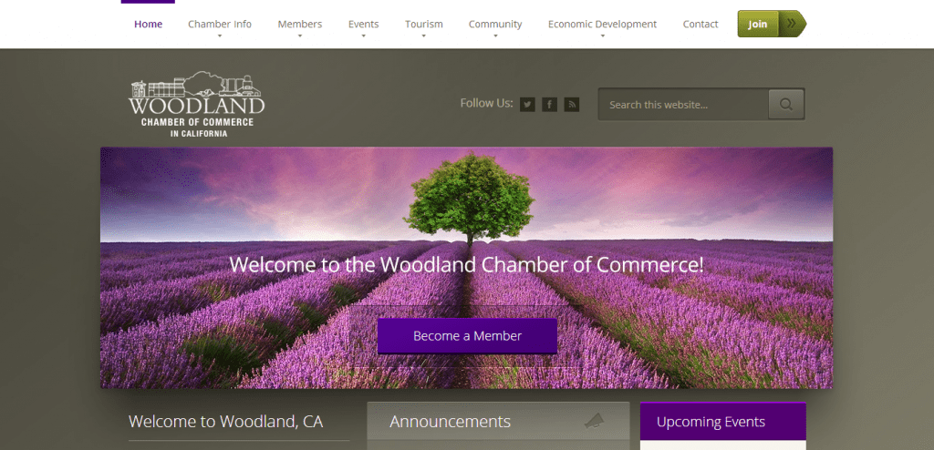 Best Website Design Woodland